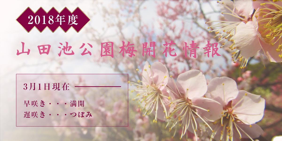 2018年山田池公園梅の見頃は3月3日くらい